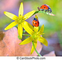 무당벌레, 꽃, 봄