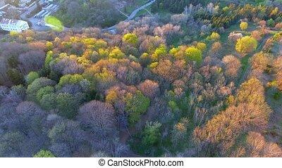 무대의, 드라이브, 나무, 가을, 기절시키는, colors., 이 있는 가운데, 시골