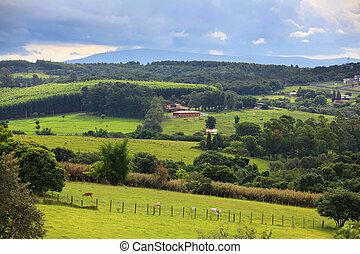 무대의, 시골의 풍경, 에서, 브라질