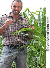 미소, 농부