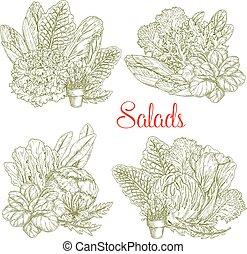 밑그림, 농장, 야채, 벡터, 양상추, 샐러드