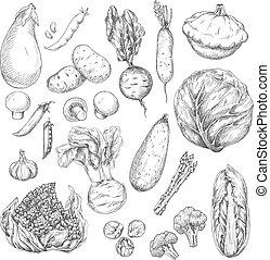 밑그림, 세트, 버섯, 음식, 디자인, 야채