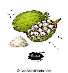 밑그림, 유기체의, superfood, 바오밥, drawing., 벡터, 음식, 기지, 건강한