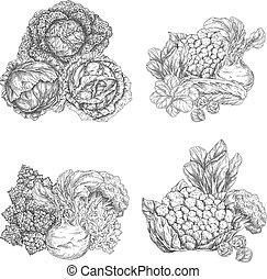 밑그림, 잎, 샐러드, 양상추, 야채, 양배추