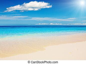 바닷가, 열대적인