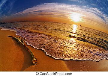 바닷가, 타이, 열대적인