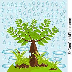 바오바브나무, 정글
