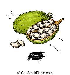 바오밥, 벡터, superfood, drawing., 유기체의, 건강에 좋은 음식, 밑그림, 기지