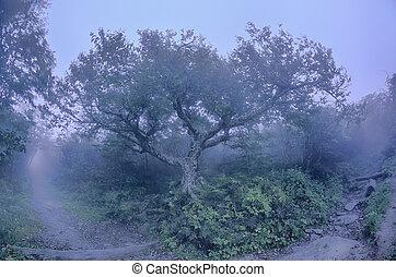 바위가 많은, 정원, 노스캐롤라이나, 푸른 산등성이 공원  방향, 가을, nc, sceni