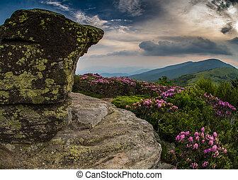 바위가 많은, 조망, 통하고 있는, jane, 드러내다, 와, 만병초