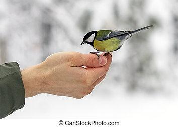 박새, 음식, 손바닥, 은 먹는다, 새