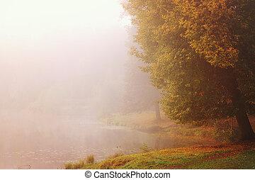 밝은, 가을, 통하고 있는, 그만큼, 은행, 의, a, 안개가 지욱한, 호수