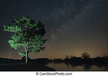 밤, 조경술을 써서 녹화하다, 의, a, 고독한 나무, 통하고 있는, 그만큼, 강둑, 향하여, 그만큼, 배경, 의, 그만큼, 별을 아로새기는 하늘
