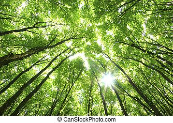 배경, 녹색의 나무
