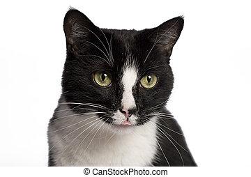 백색, 검은 고양이