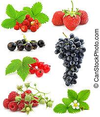 백색, 과일, 고립된, 수집, 장과