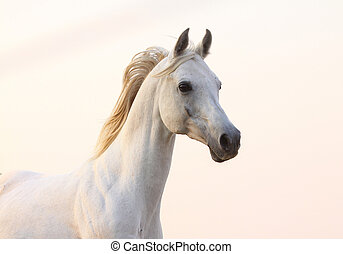 백색, 일몰, 말