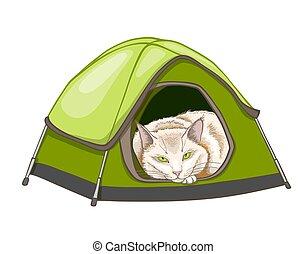백색, 텐트, 고양이