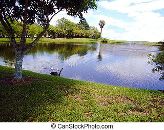 백조, 와..., 즈크 바지, 통하고 있는, 정원사 노릇을 함, 물 호수