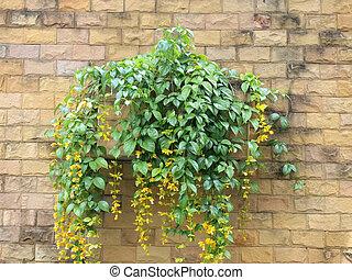 벽, 냄비 따위 하나 가득, 꽃, 벽돌