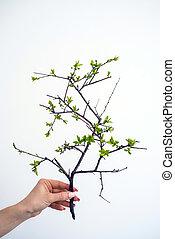 보유, 녹색의 식물, 에서, a, 손