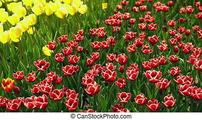 봄, 기절시키는, 조경술을 써서 녹화하다