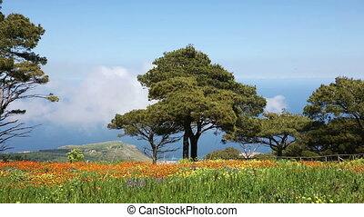 봄, 기절시키는, sicilian, 조경술을 써서 녹화하다, 자연