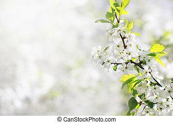 봄, 꽃의, 배경