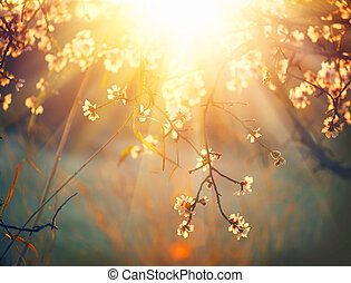 봄, 꽃, 배경., 아름다운, 성격 장면, 와, 꽃 같은, 나무