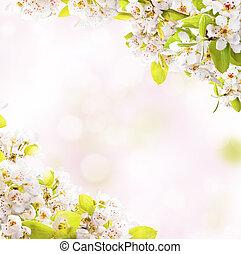 봄, 꽃, 백색 위에서, 배경