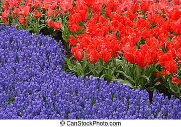 봄 꽃, 침대