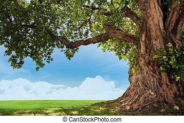 봄, 목초지, 와, 큰 나무