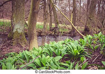 봄, 시골, 와..., 강