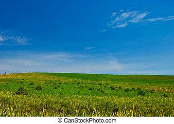 봄, 시골, 조경술을 써서 녹화하다
