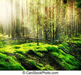 봄 안개가 덮인, 늙은, 숲