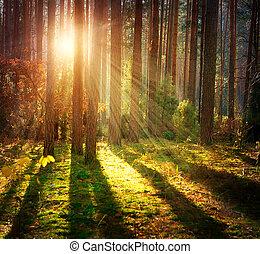 봄 안개가 덮인, 늙은, forest., 가을, 나무