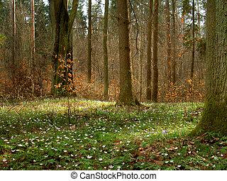 봄, 에서, 숲