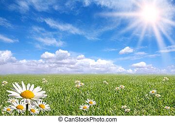 봄, 외부, 행복하다, 밝은, 일