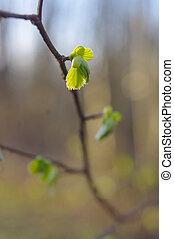 봄, bud., 구성, 의, nature.