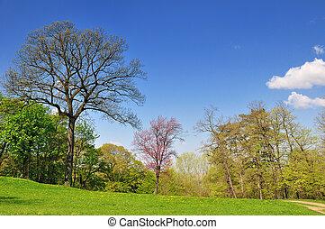 봄, park에게서