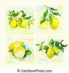 부엌, art., 손, 그어진, 수채화 물감, 삽화, 의, 레몬