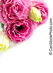 분홍색의 꽃, 고립된