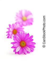 분홍색의 꽃
