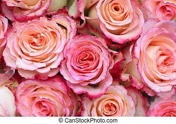 분홍색의 ros, 배경