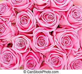 분홍색의 ros, 연인 날, 배경