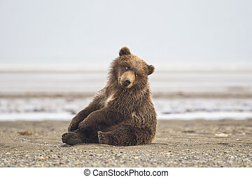 불곰, 야수의 새끼