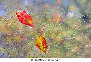 붙이게 된다, 잎, 창문