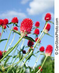 빨강 꽃, 와, 가득하다, 의, 생명력