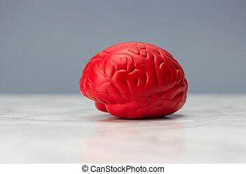 빨강, 뇌