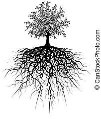 뿌리, 나무